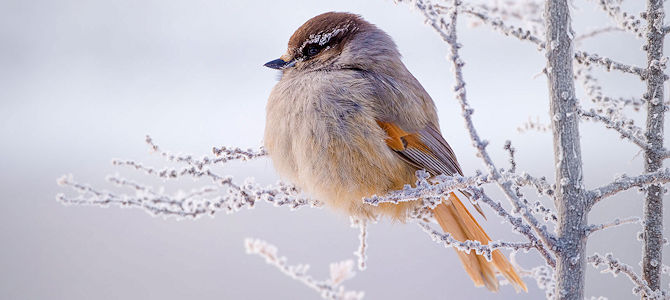 Birdy, It's Cold Outside