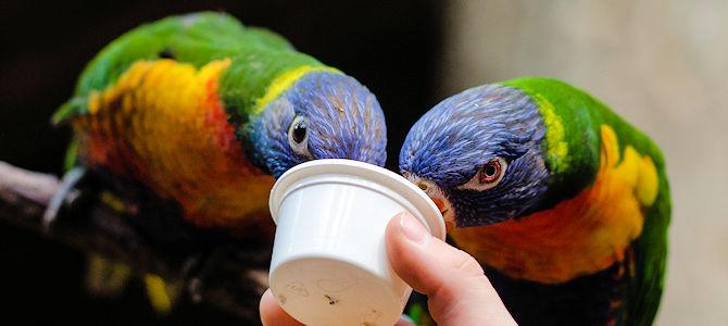Birding in Zoos