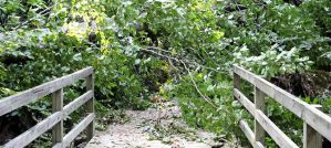 Blocked Trail, Hurricane Irene Damage - Photo by Virginia State Parks