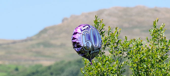 Birthday Balloon Snagged in Trees - Photo by Matt Buck