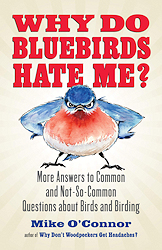 Why Do Bluebirds Hate Me?