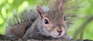 Squirrel Hoping for Something Better - Photo by Chris Murphy