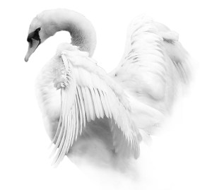 Artistically (and Beautifully!) Manipulated Mute Swan - Image by Martyn Fletcher
