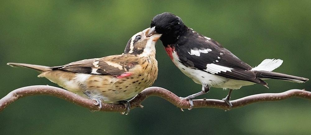 Feeding Time - Photo by Gary Tyson