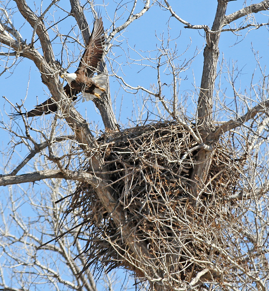 Eagle Nest - Photo by Acorns Resort