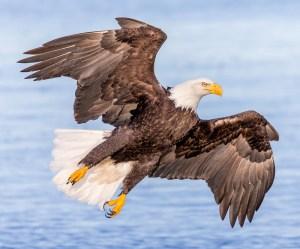 Hawk-ward Pose - Photo by Andy Morffew