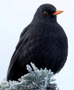 Winter Pose - Photo by Artur Rydzewski