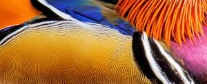 Drake Detail - Photo by Martin Cooper