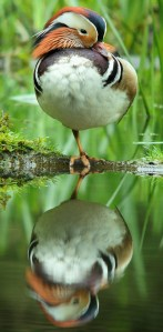 Balanced Reflection - Photo by Frank Vassen