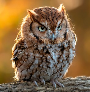 A Bit Grumpy - Photo by John Ernst