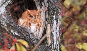 Sleepy Autumn - Photo by Andy Reago & Chrissy McClarren