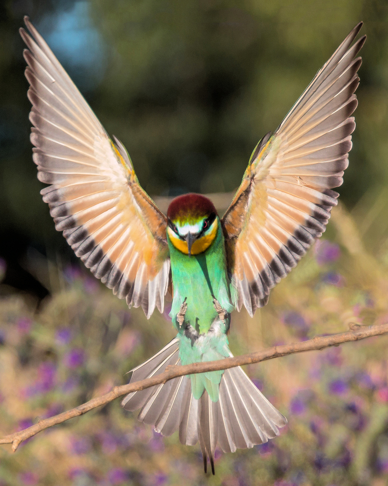 Colorful Landing - Photo by Iker Cortabarria