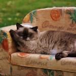 Couchkredit der SWK