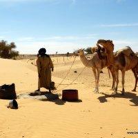 Tankowanie wielbłądów