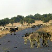 Droga upstrzona osłami
