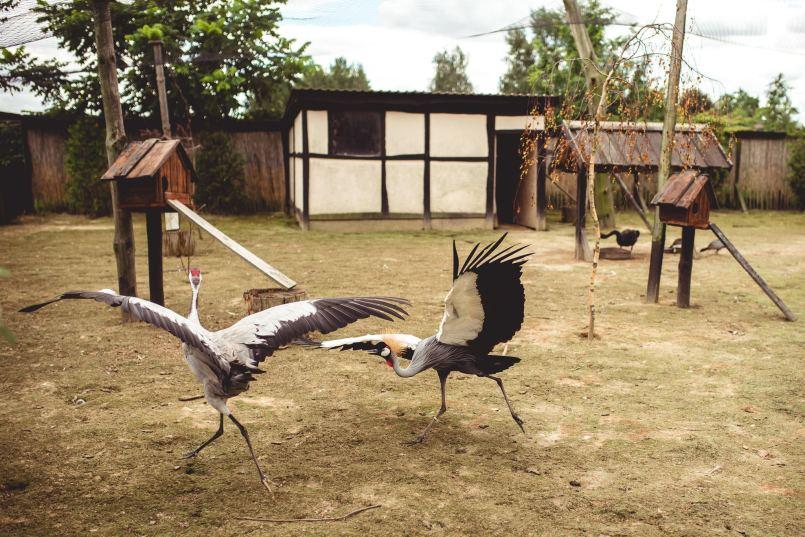 ptaszarnia zoo wojciechów