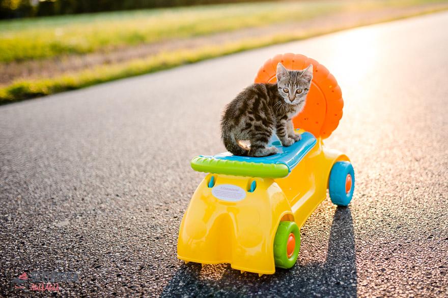 jeżdzik i pchacz nawet koty się bawią