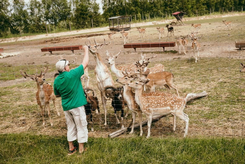 bałtów safari karmienie zwierząt