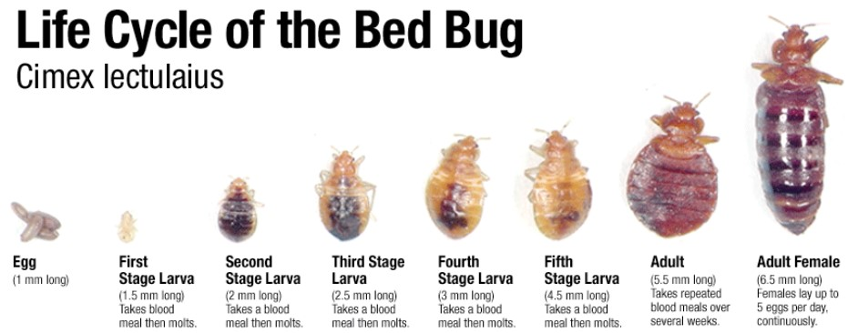 Toronto Don Valley Hotel Bed Bugs