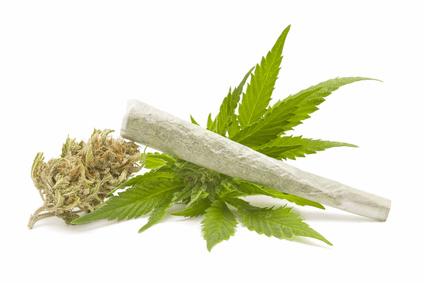 Cannabis demnächst legalisiert