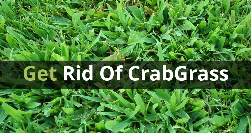 How to Get Rid of Crabgrass for Good