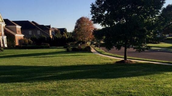 frontyard-1200