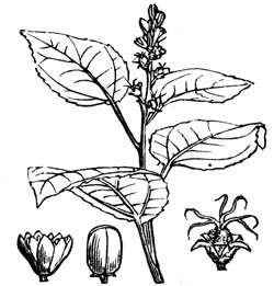 Miscellaneous Illustrations