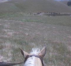 Me Driving Cattle (05 JUN 1998)
