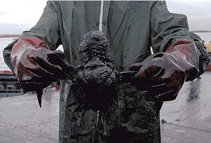 Bird Trapped in an Oil Spill