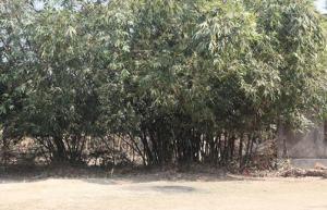 Sankarpura em Rudradvipa