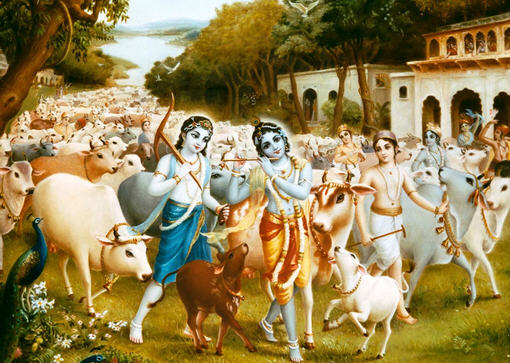 Os belos Krsna e Balarama pastoreando as vacas em Vrindavana