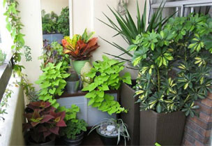Tips And Ideas To Create Roof Gardening Balcony Garden Window
