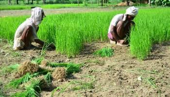 बहुत कम वर्षा वाले क्षेत्रों में ऐसे कर सकते हैं खेती