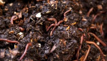 किसानों को मिली केसीसी से वर्मी खाद खरीदने की सुविधा