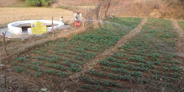 मनरेगा ने दिखाई राह तो आत्मनिर्भरता के रास्ते पर चल पड़ा किसान