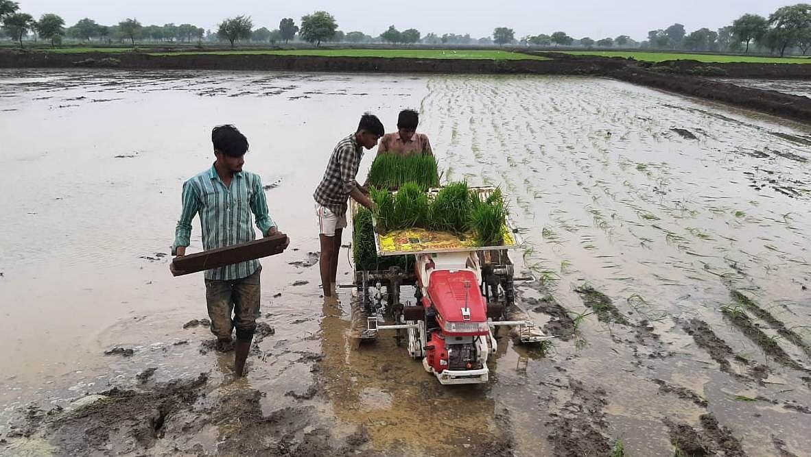 पैडी ट्रांसप्लॉटर मशीन से धान की रोपाई की ओर बढ़ रहा किसानों का रूझान
