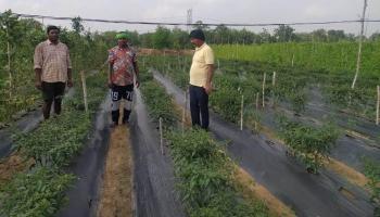 सरकारी योजना का लाभ लेकर सब्जी की खेती