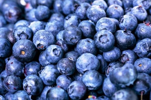 ब्लूबेरी खेती