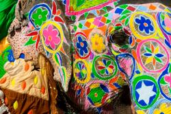 Elephants during Holi, painted images of peacocks and tigers on the foreheads,