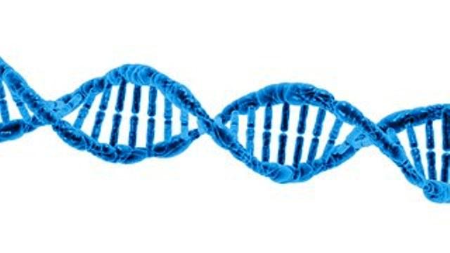 DNA, kromosom