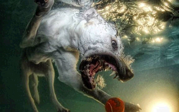 dogs in water14