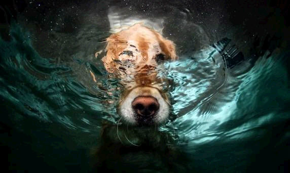 dogs in water5