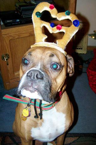Pet-Christmas4