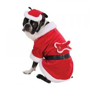 Pet-Christmas6