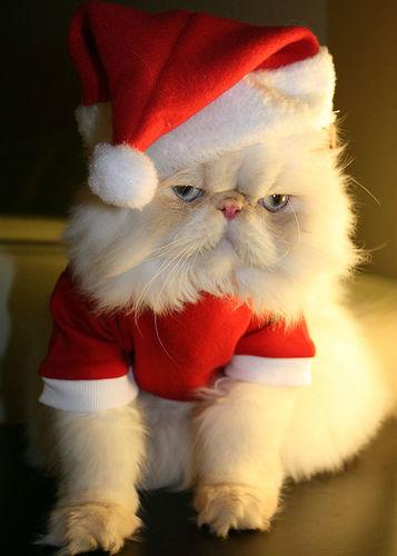 Pet-Christmas9