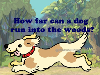 How far can a dog run into the woods