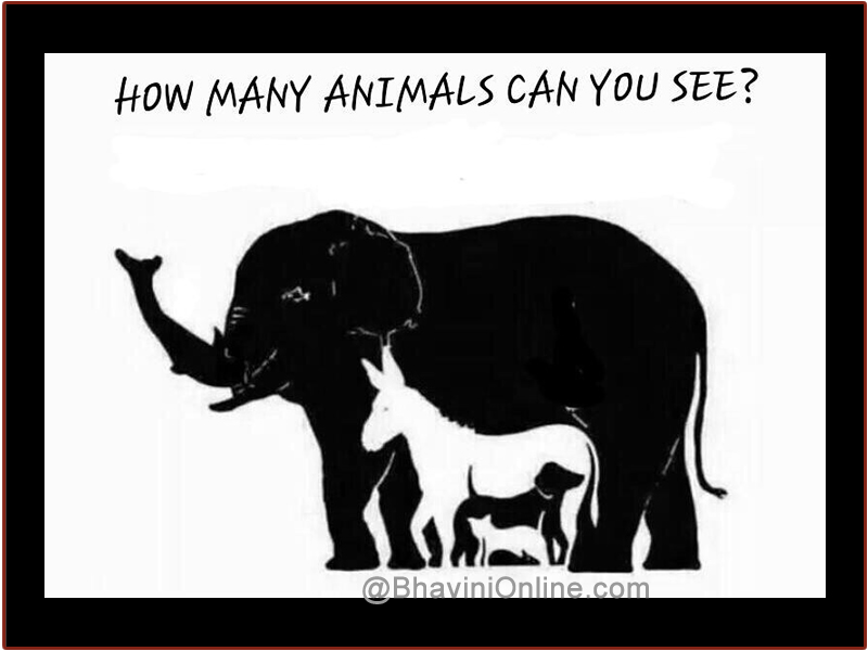 fun picture riddle how many animals do you see in the photo
