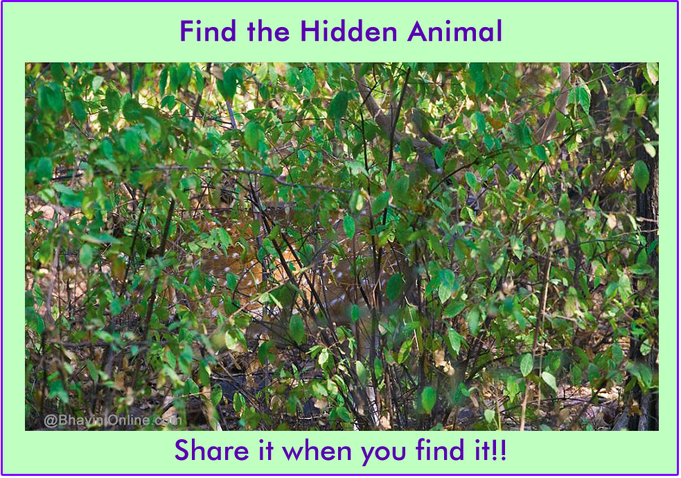 How To Find A Cat When It S Hiding