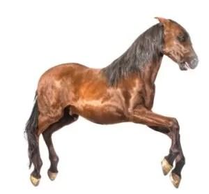 Lot 18 Prop horse