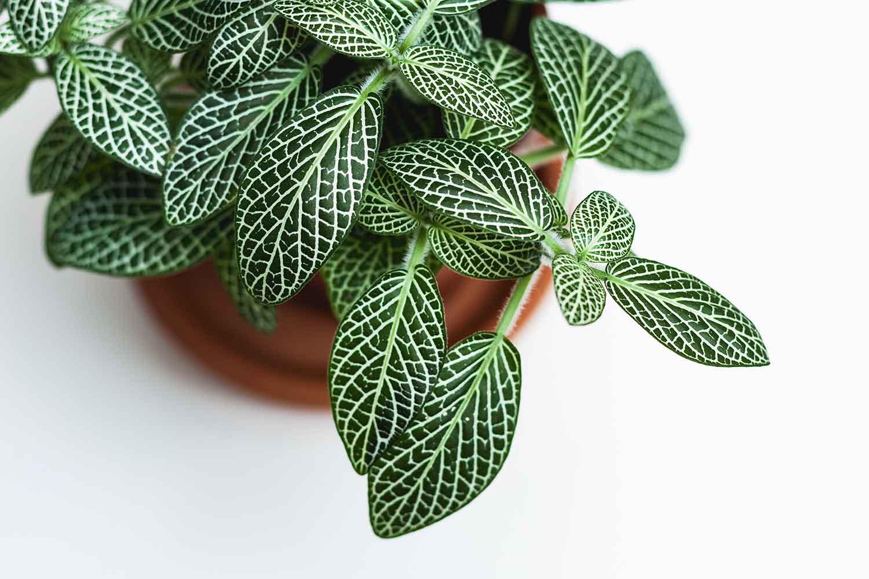 Plant Pots Bunnings